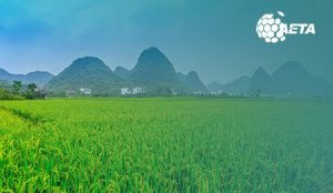 green field in China